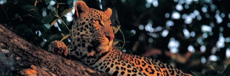 9 Day South Luangwa & Lake Malawi